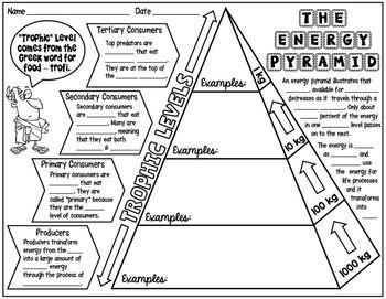 Energy pyramid worksheets pdf