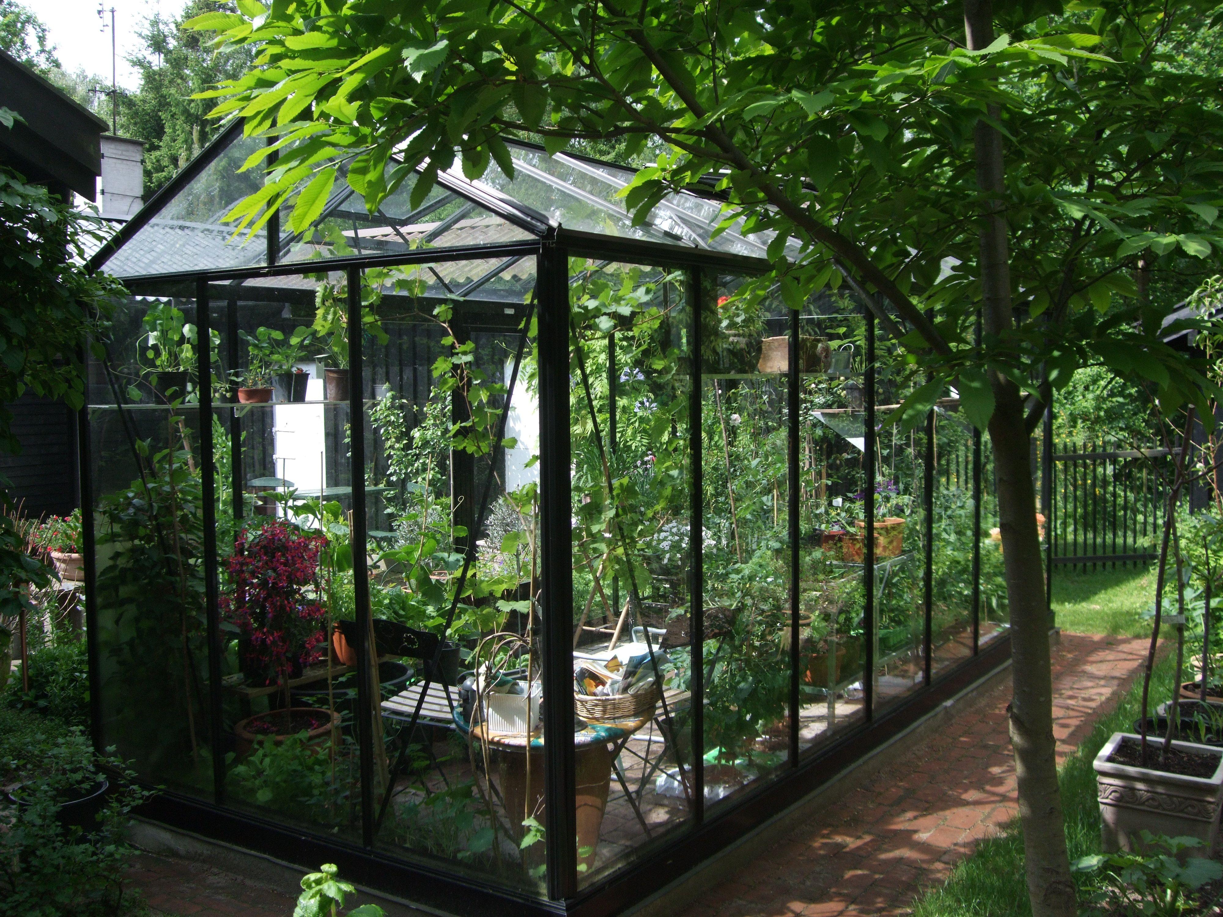 1000  images about trädgård   växthus on pinterest
