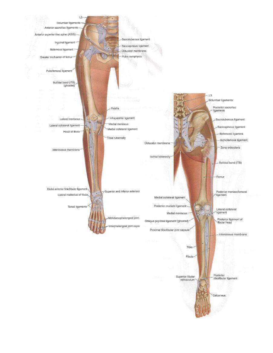Fein Human Anatomy Terms Ideen - Anatomie Und Physiologie Knochen ...