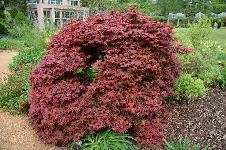 The 16 Best Ornamental Trees for the Landscape | White ...