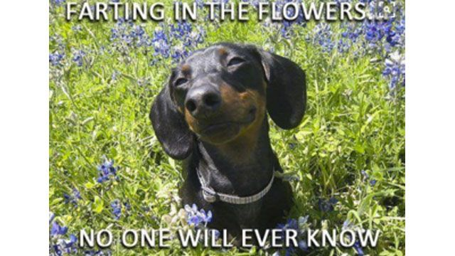 15 Wiener Dogs Who Totally Won At Life - Rantpets - http://www.rantpets.com/2015/11/17/15-wiener-dogs-who-totally-won-at-life/