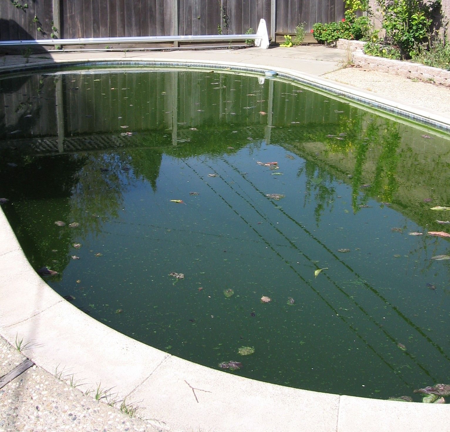 Dirty gross pool 1533—1473 Apartments Pinterest