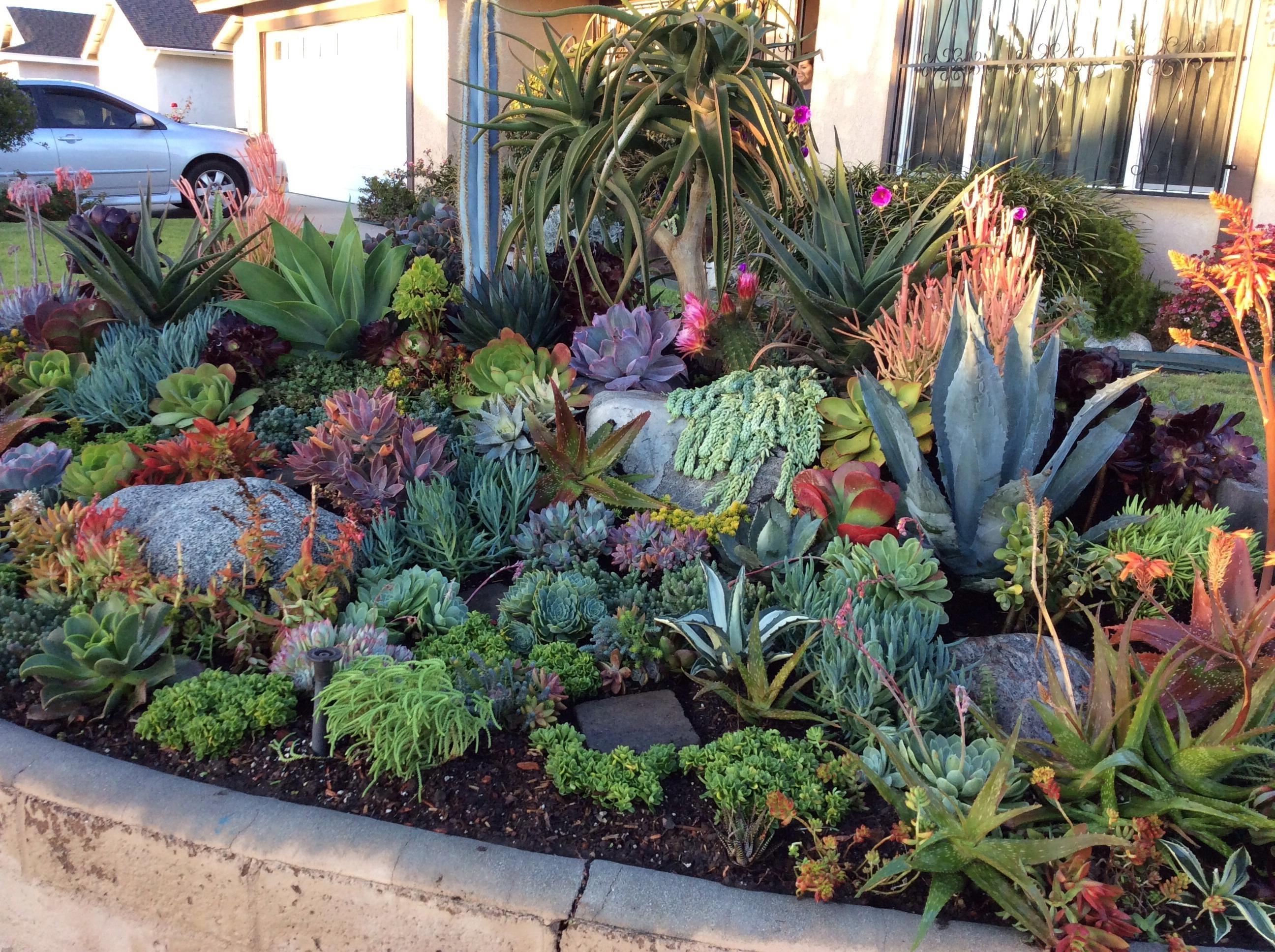 Drag to resize or shift drag to move garden pinterest - Photo de jardin exotique ...