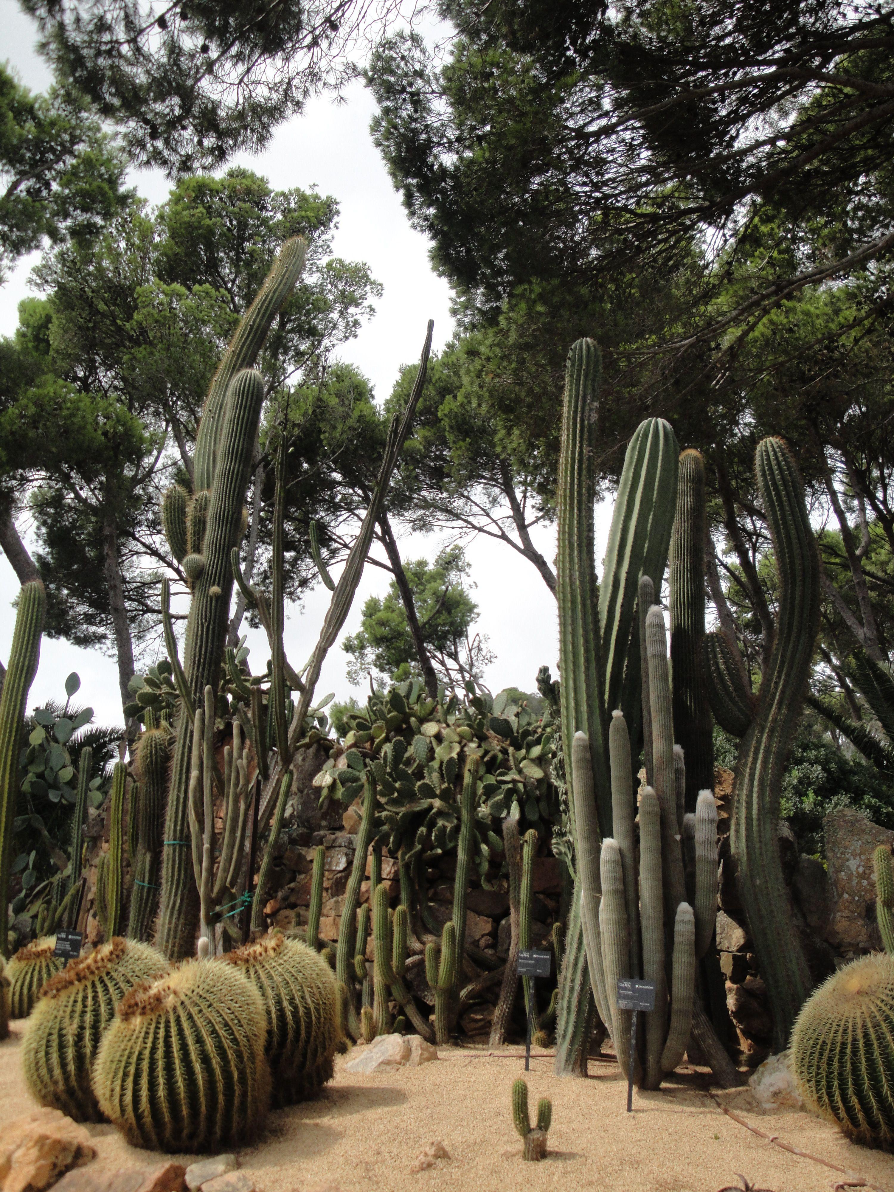 Jardins de cap roig calella de palafrugell costa brava for Jardines cap roig