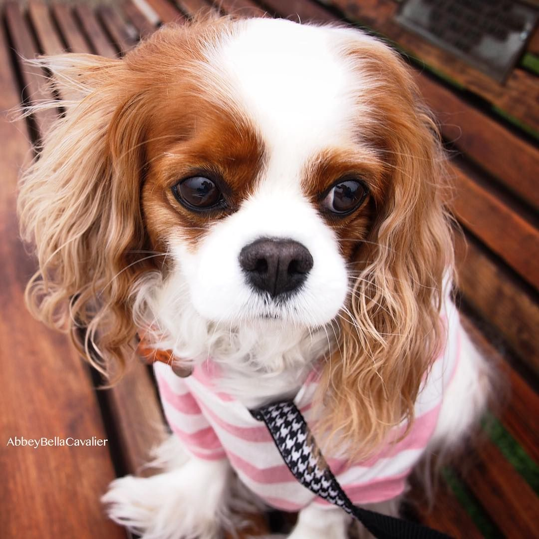 Funny puppy names for boy and girl dogs purewow cavalier king funny puppy names for boy and girl dogs purewow sciox Gallery