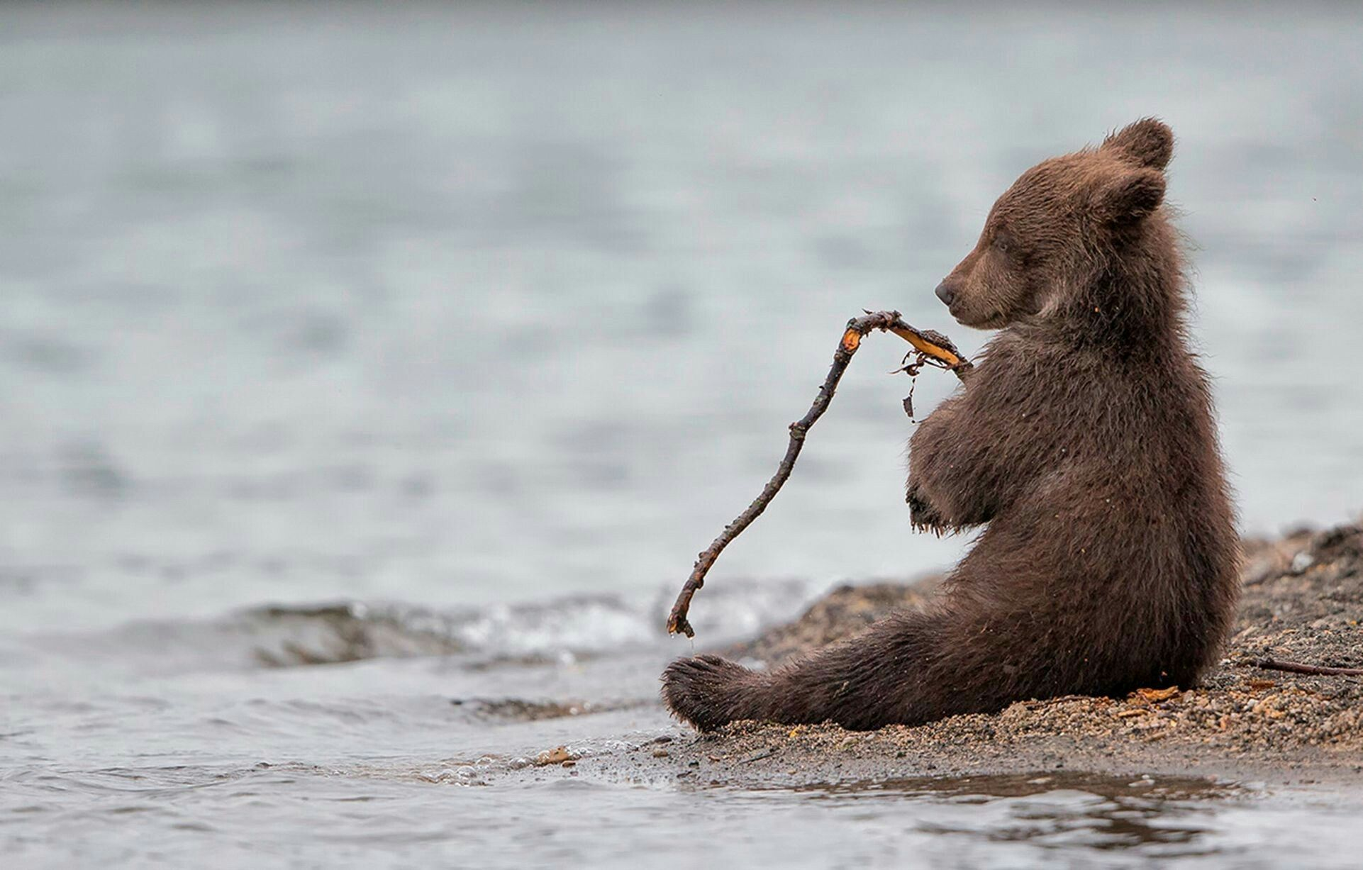 Aww, looks like he was fishing and his pole broke #bears