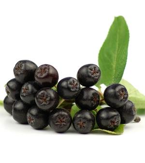 Health Benefits Of Maqui Berry Berries Fruit Superfood