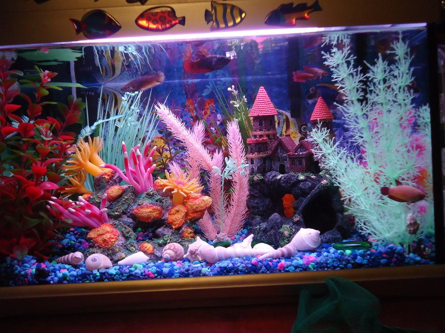 Get colorful not all betta tanks have to have a natural for Big betta fish tank