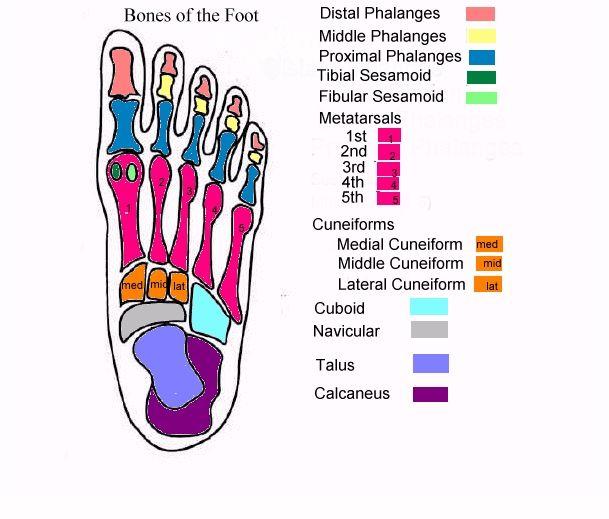 the foot diagrams bing images medical stuff foot. Black Bedroom Furniture Sets. Home Design Ideas