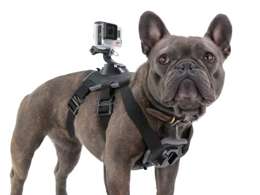 Dog Harness Chest Back Mount Strap Accessories For Gopro 1 2 3 4