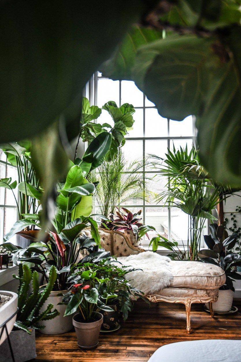 Un appartement jungle - PLANETE DECO a homes world