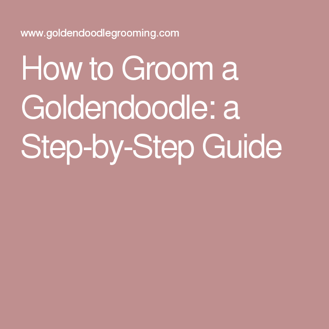 How to Groom a Goldendoodle: a Step-by-Step Guide