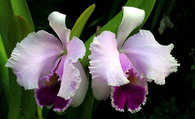 Reproducción de las orquídeas