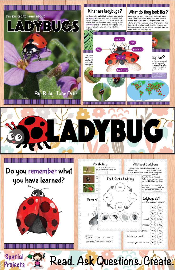 small resolution of Check out this All About Ladybugs nonfiction unit for your 1st