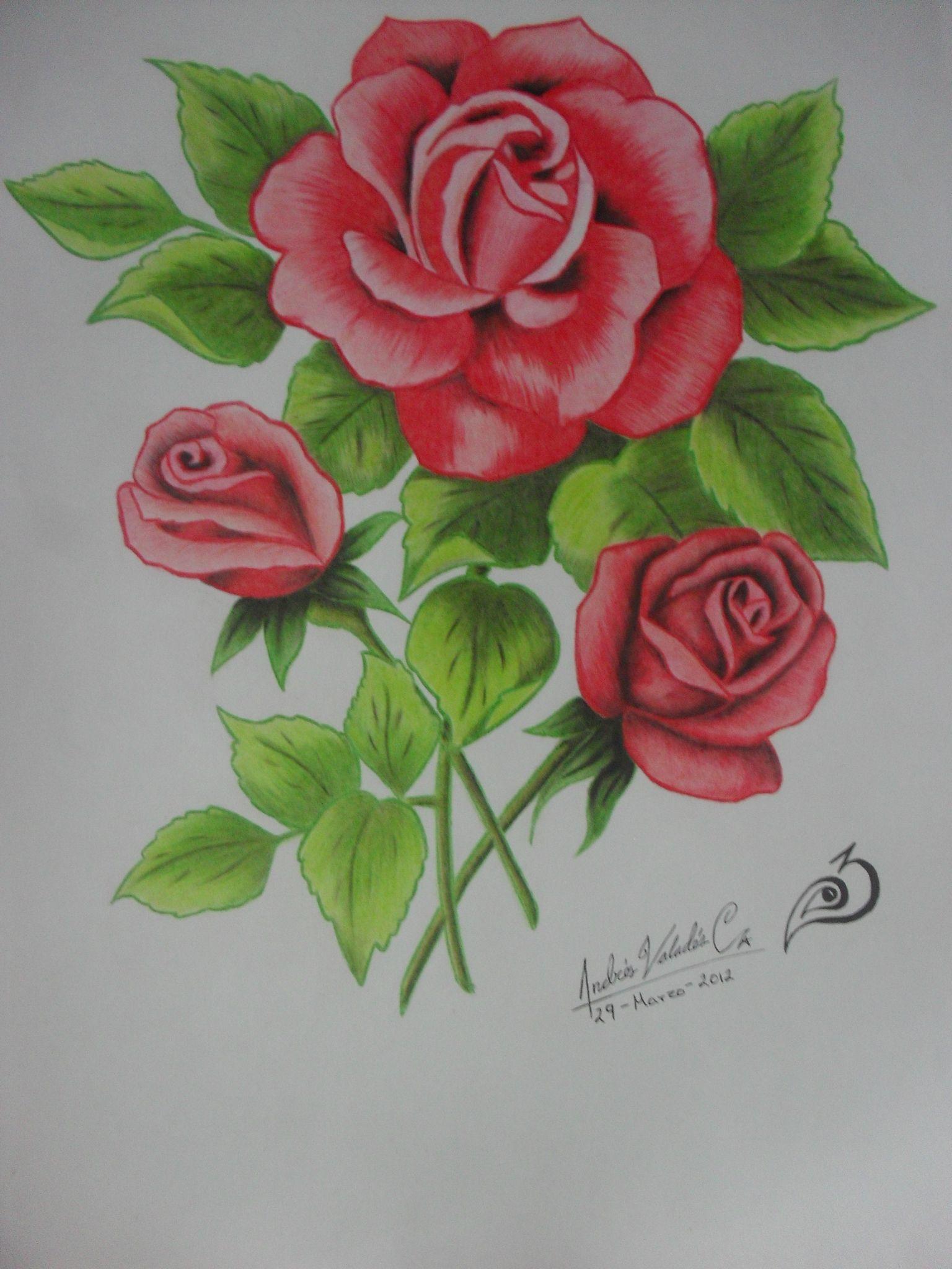 Rosas A Lapices De Colores Dibujos De Rosas Flores Dibujadas A