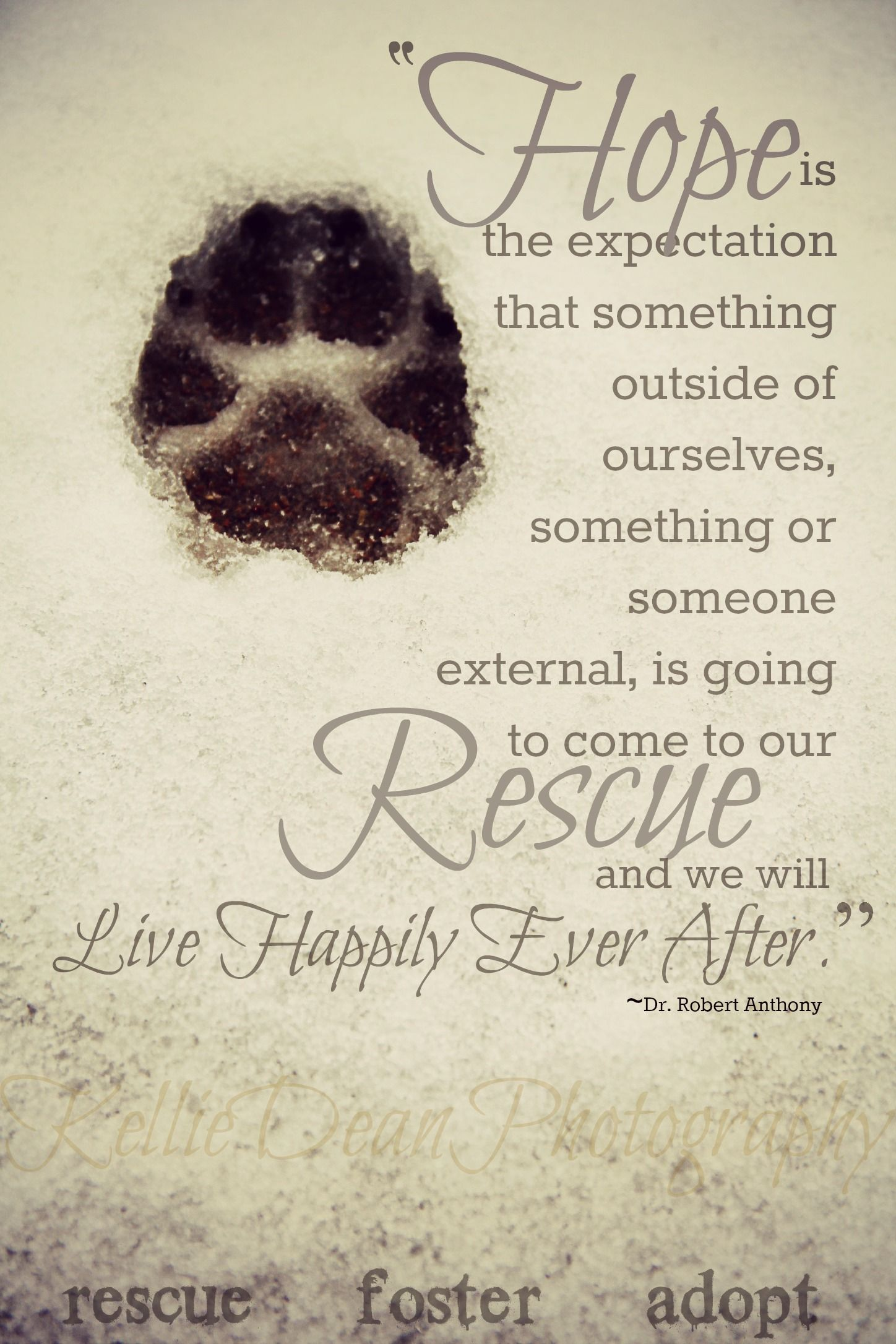 Pin By Kelliedean Photography On Dogs Rescue Quotes Dog Adoption Quotes Animal Rescue Quotes