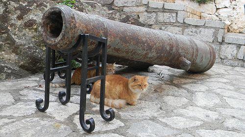 I gatti di Marmaris