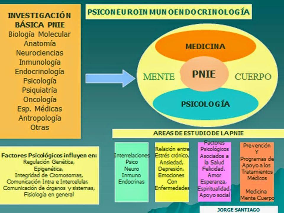 psiconeuroinmunología sistema endocrino sistema inmunologico ...