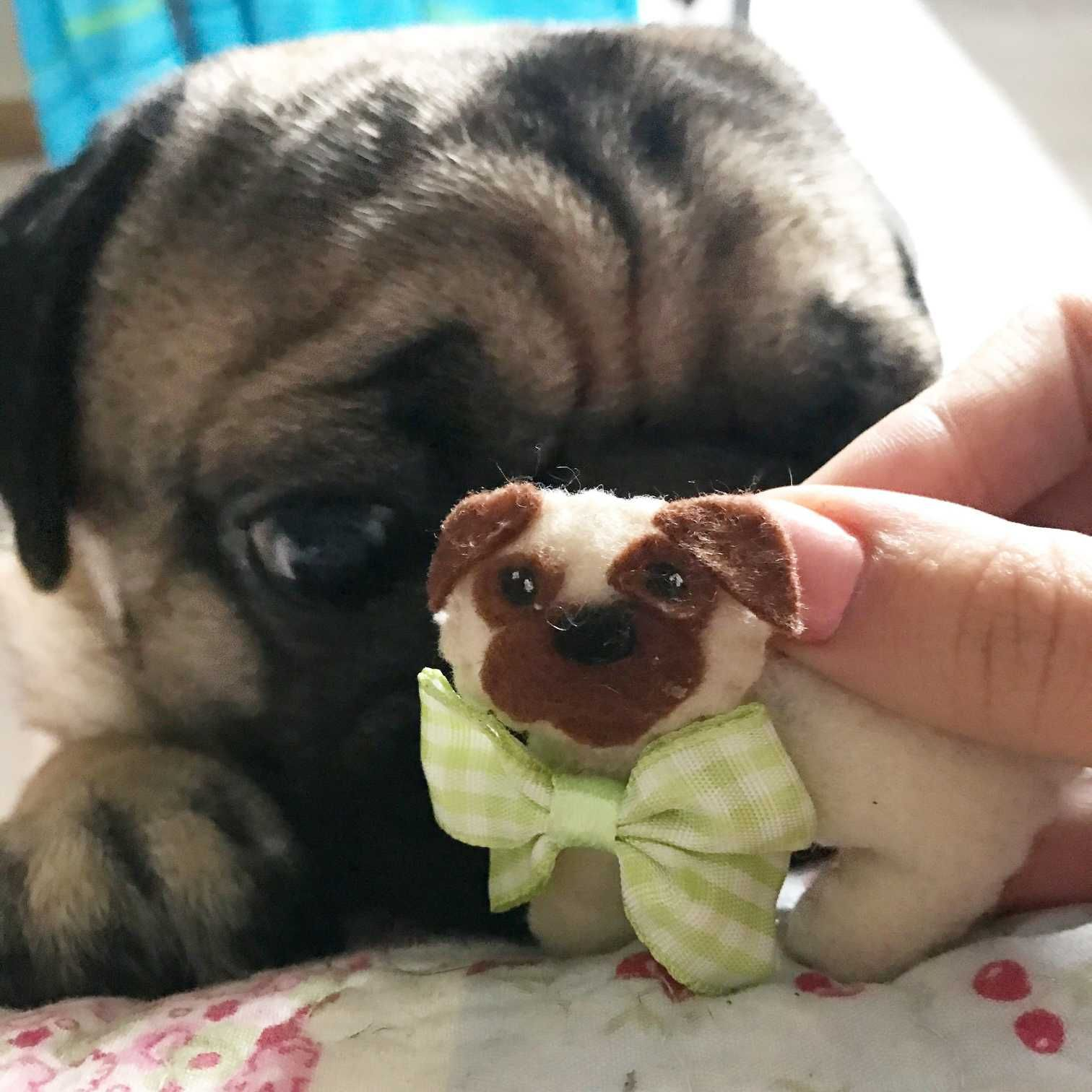 Information About Pug Wont Eat Pugs Food Animals Dog Breeds List