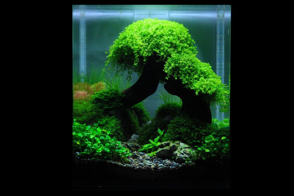planted nano tanks the art of the planted aquarium die kunst der pflanzen aquarien. Black Bedroom Furniture Sets. Home Design Ideas