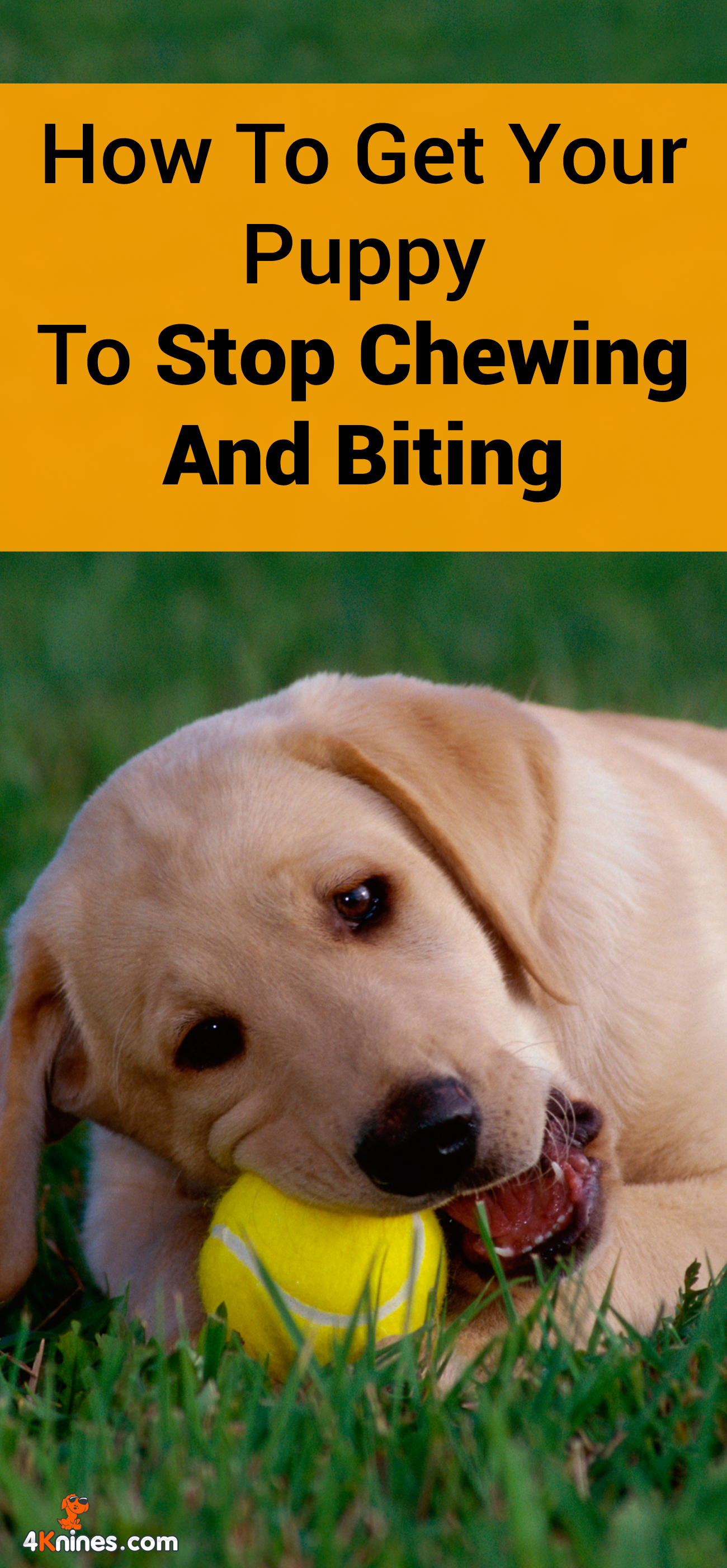 Bad Behavior In Dogs How To Stop Chewing Biting Digging And More Puppy Chewing Behavior Dog Behavior