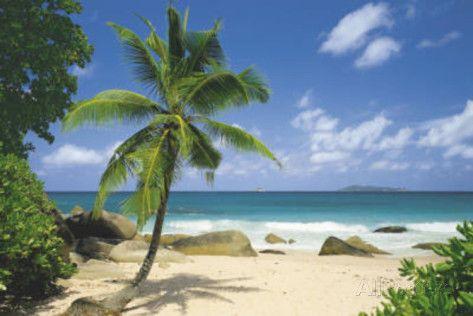 Palm Beach Tropical Landscape Photo Art Poster Print Prints Landscape Photos Landscape Poster Beach Posters