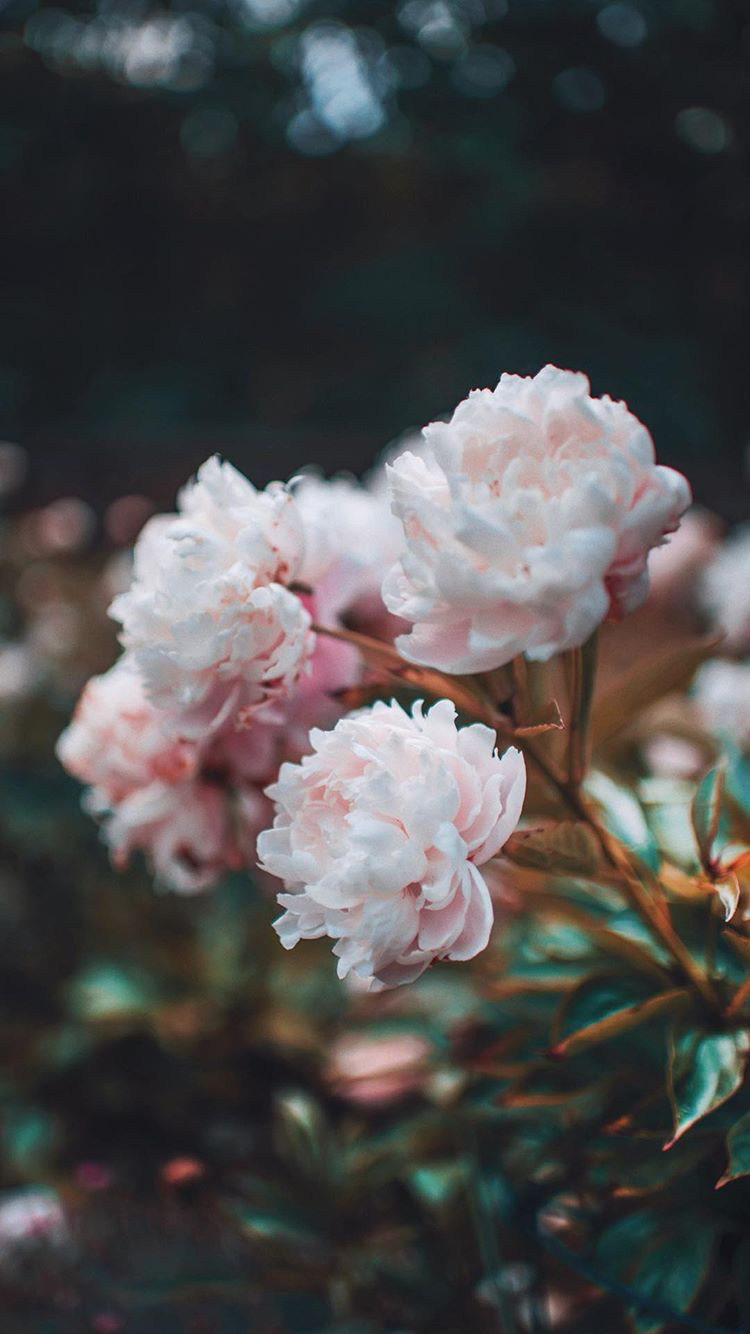 brandon woelfel flowers pink blush pink green winter | 2018