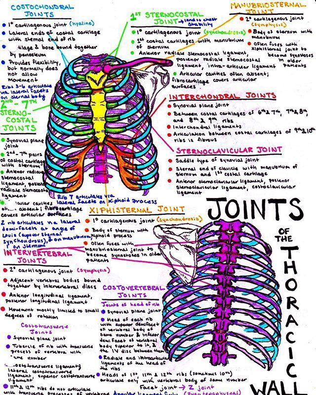 Pin de Abigail Elena en Resumen | Pinterest | Apuntes, Medicina y ...