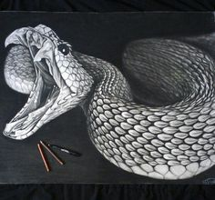 Pin By Eileen Lawrence On Copperhead Snake Drawing Snake Art
