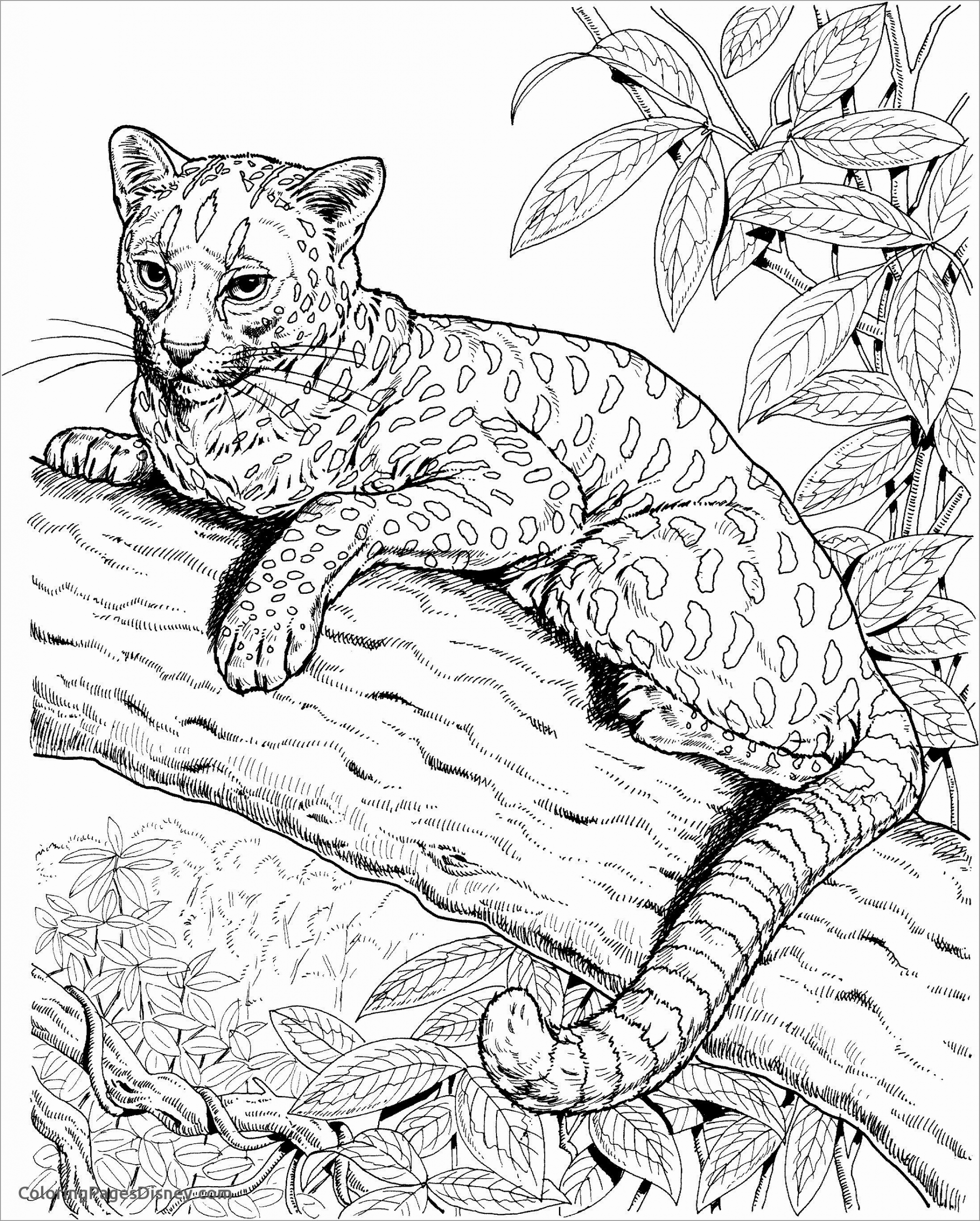 Free Printable Coloring Pages For Kids Cat Realistic Mermaid Coloring Pages Animal Coloring Pages Cat Coloring Page