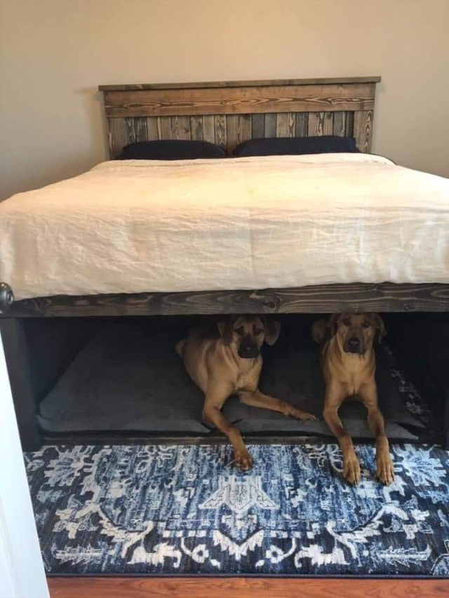 Built In Dog Beds Underneath People Bed In 2020 Dog Bed Home Decor Diy Furniture