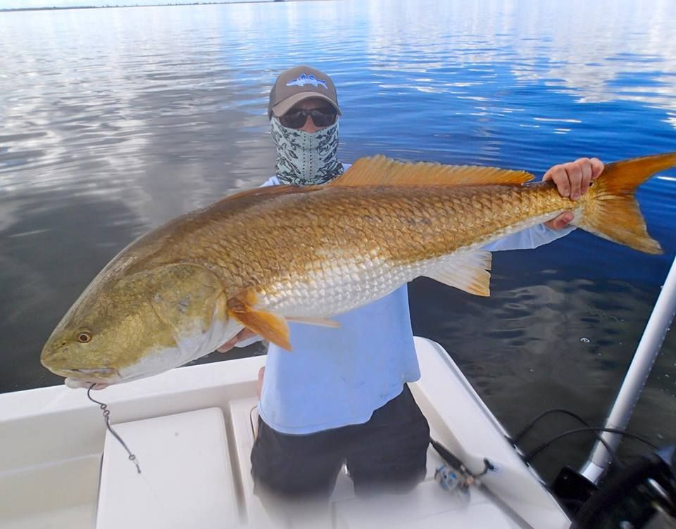 Redfish are biting in titusville for Florida saltwater fishing