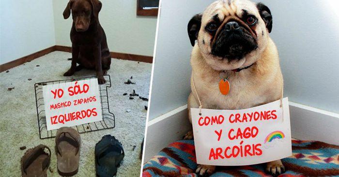 30 Perros Traviesos Que Fueron Expuestos En Publico Por Sus Duenos Perros Porta Perros Perros Lindos