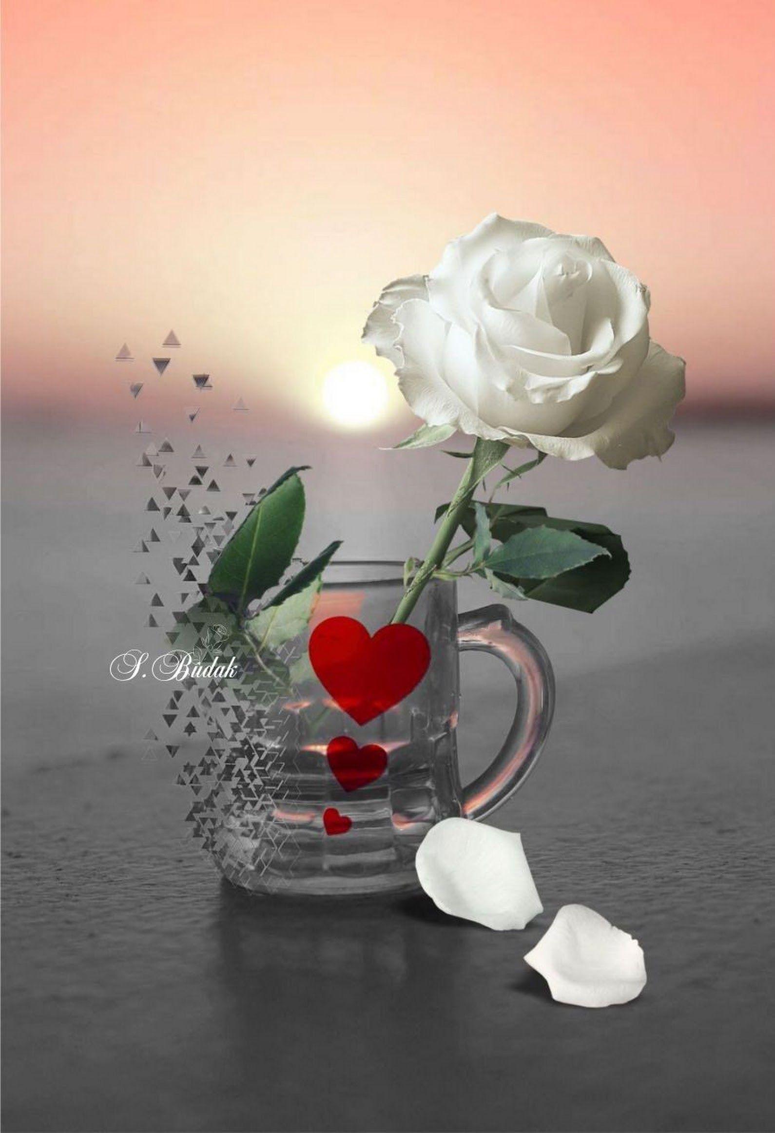 For You Com Imagens Rosas Vermelhas Bela Rosa Rosas