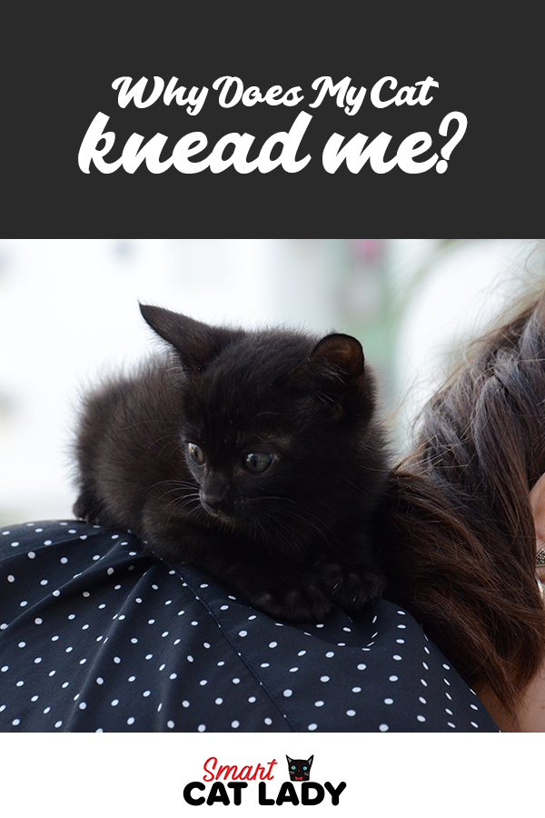 Why Does My Cat Knead Me? (With images) Cat problems