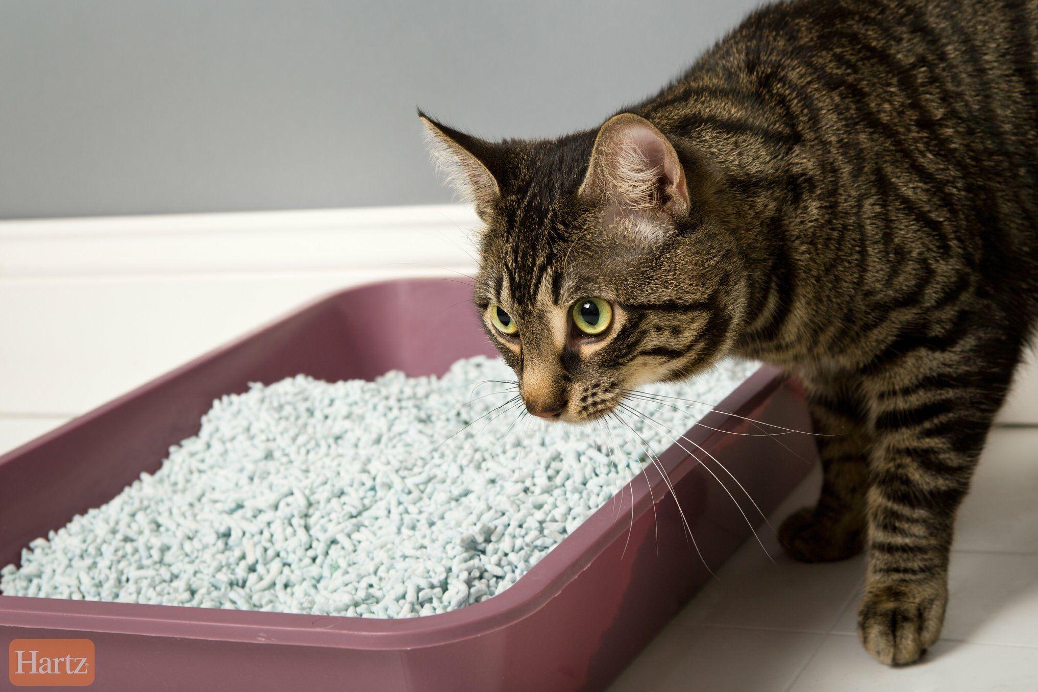 Amazon Com Hartz Multi Cat Lightweight Recycled Clumping Paper Cat Litter Cat Litter Paper Cat Litter Best Cat Litter