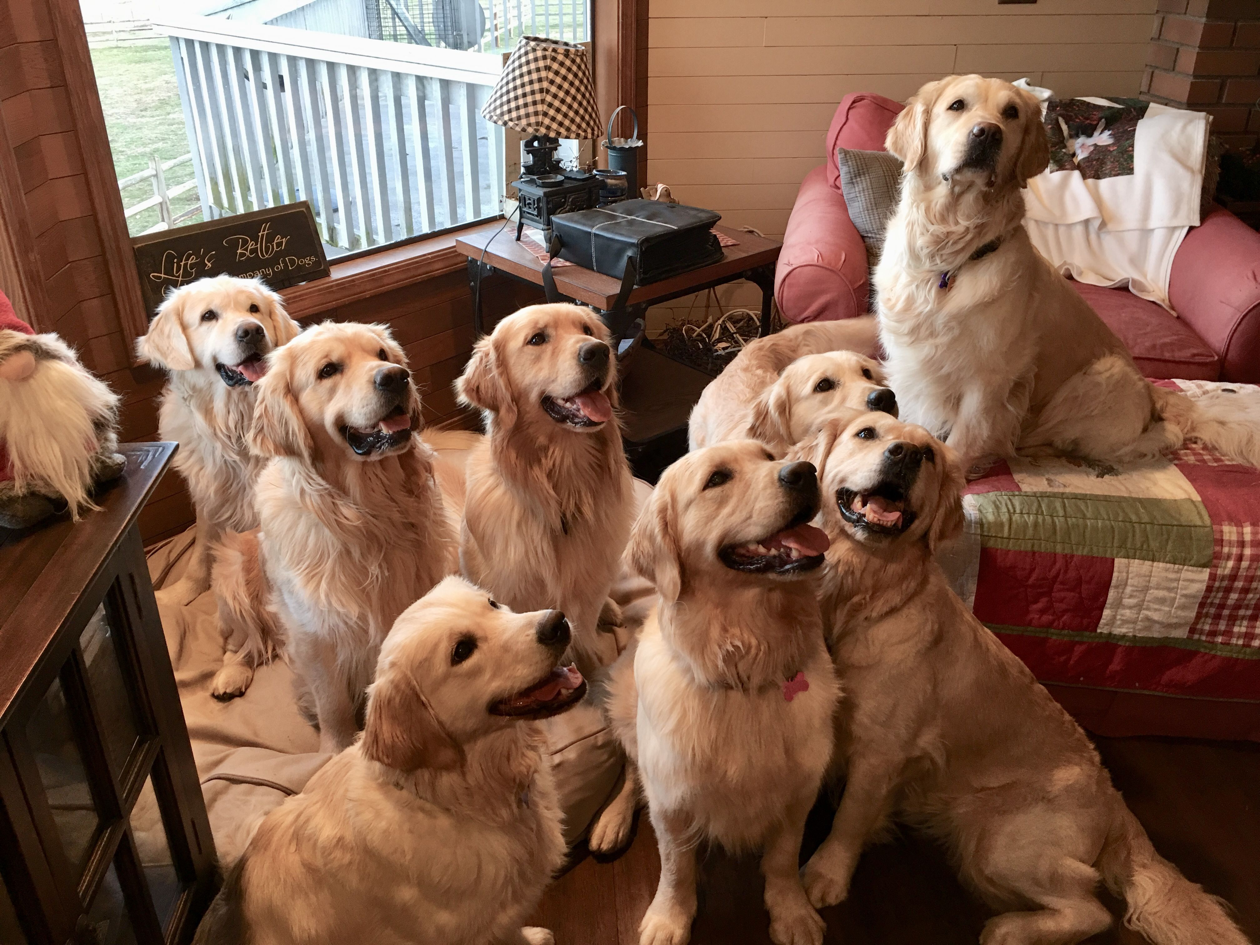 Family Portrait I Would Love To Have This Many Golden Retrievers