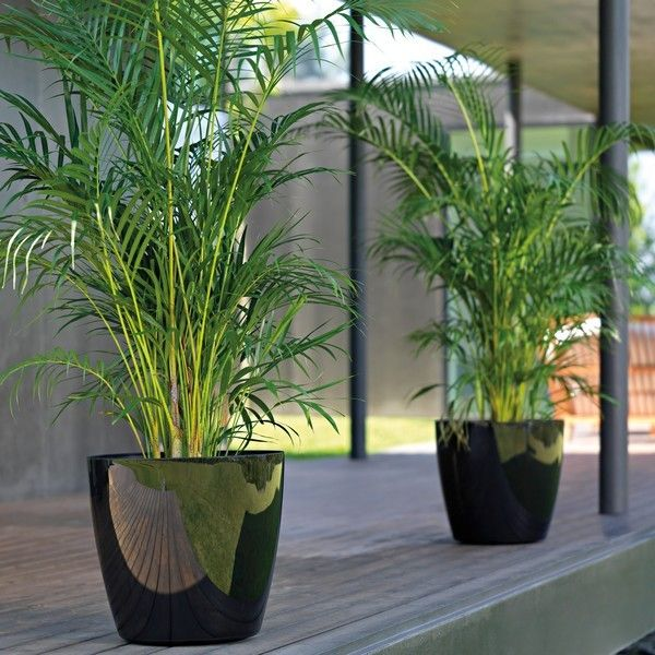 Pot plante exterieur for Plante design exterieur