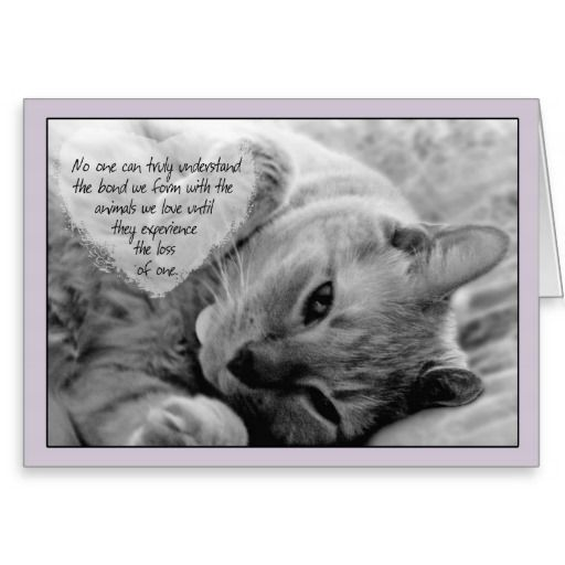 Quotes About Losing A Cat Quotesgram 3 Cats Pets Pet Loss