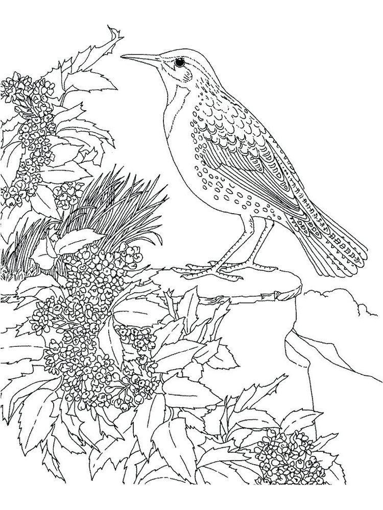 Realistic Hummingbird Coloring Pages Hummingbirds Are Tiny Birds