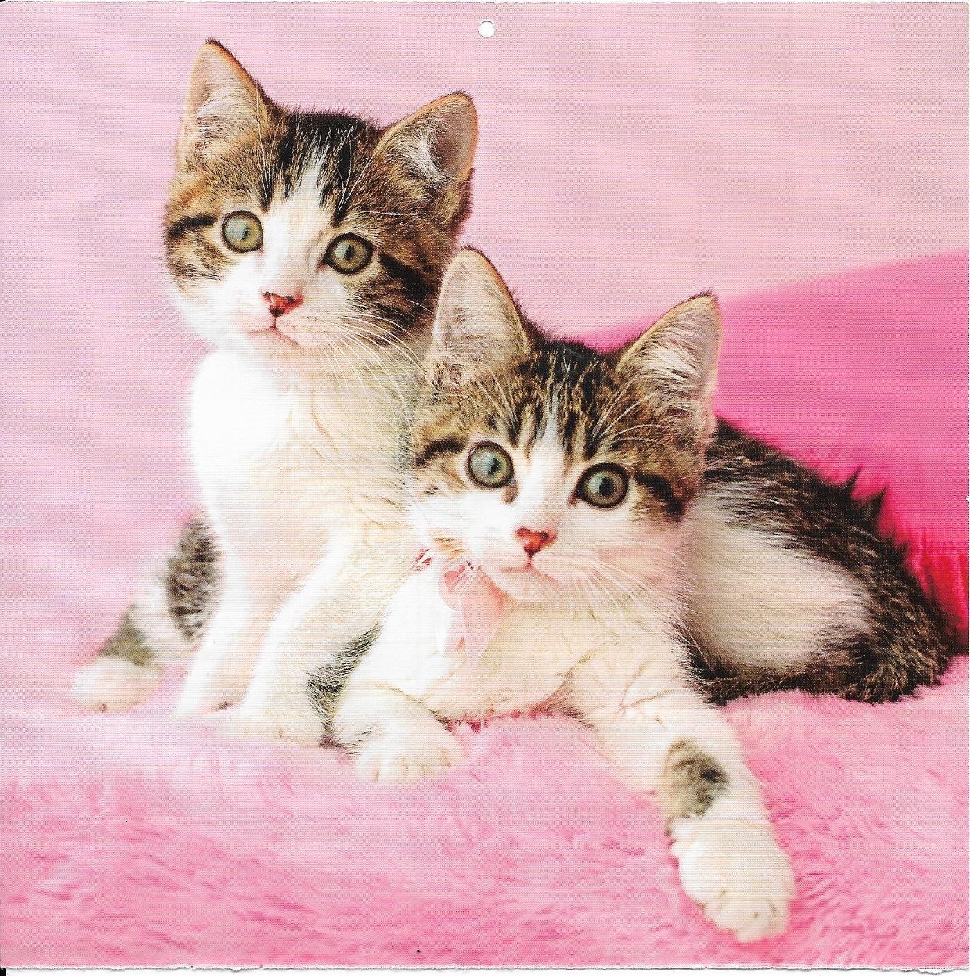 Pin Von Deanna Hughes Auf Cats Kittens 2 Susse Katzen Katzen Tiere