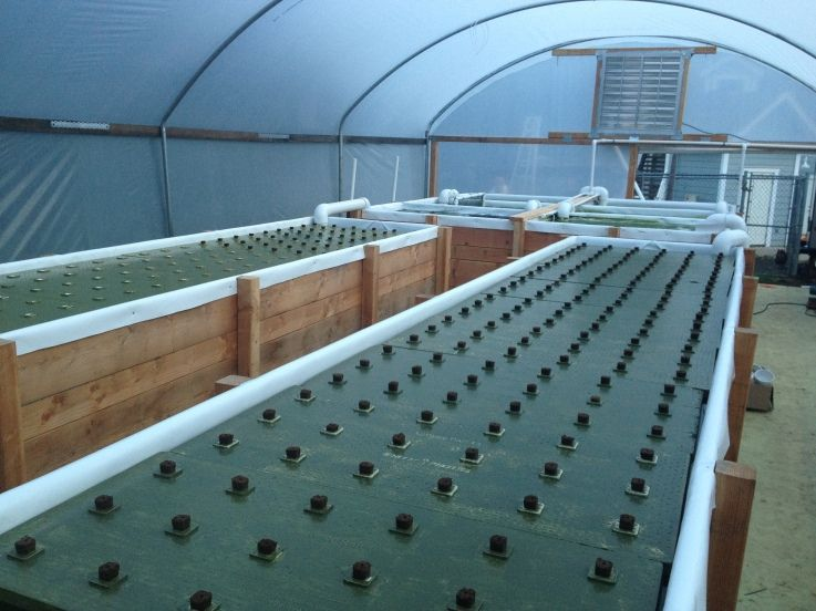 First set of rafts planted