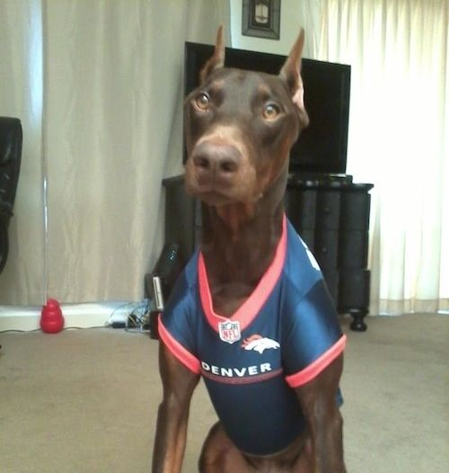 30 Dogs Who Are Ready For The Super Bowl Dogs Dog Lovers I