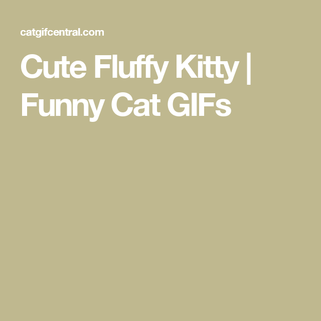 Cute Fluffy Kitty | Funny Cat GIFs