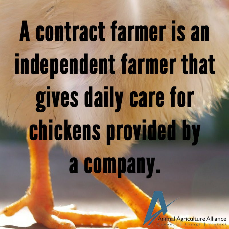 What Is A Contract Grower A Contract Grower Is An Independent