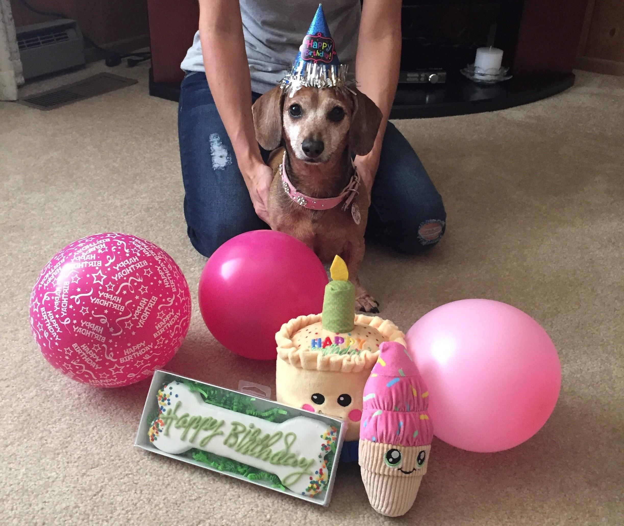 Funny Weiner Dog Birthday Meme