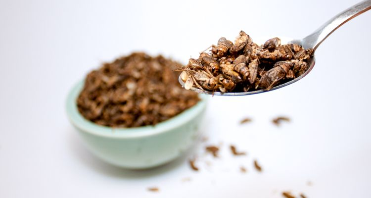 Insects are making their way into baked goods, but it's a good thing.