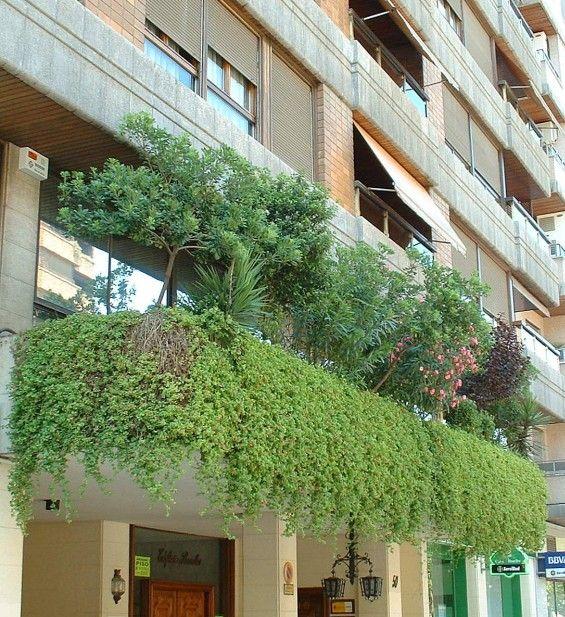 Plantas colgando hay que ver como manejar el creciendo en - Plantas para terraza con mucho sol ...