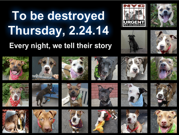 Big List Of Dogs Tonight That Need Us To Help Save Their Lives Please Share Everywhere To Rescue A Death Row Dog Plea Death Of A Pet Dog List Puppy Adoption