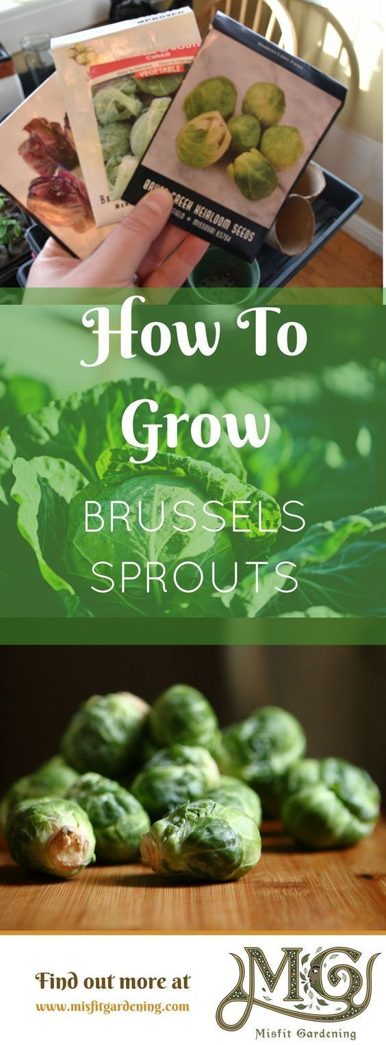 11 Super Easy Plants To Start Growing This Fall Brussel 400 x 300